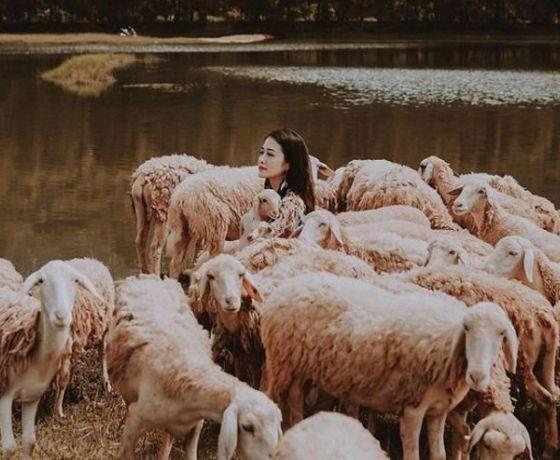 Đồng cừu Gia Hưng - Ninh Bình