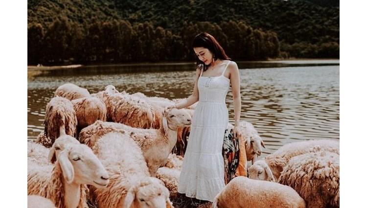'Say men' cánh đồng cừu Gia Hưng Ninh Bình đẹp tựa cổ tích