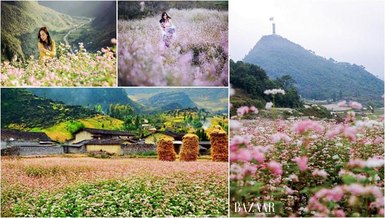 """Ghim ngay lại 5 địa điểm ngắm hoa tam giác mạch """"đẹp quên lối về"""" ở Hà Giang"""