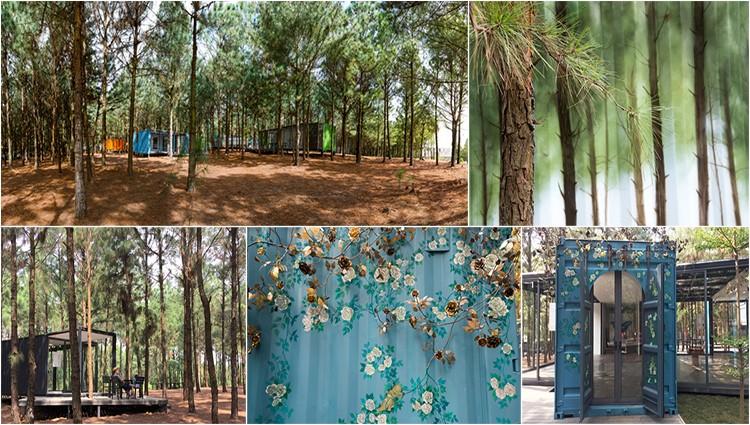 Khu rừng thông bên hồ – điểm chơi cuối tuần gần Hà Nội