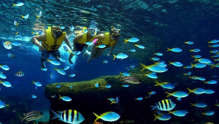 Lặn ngắm san hô trong lòng biển Sơn Trà