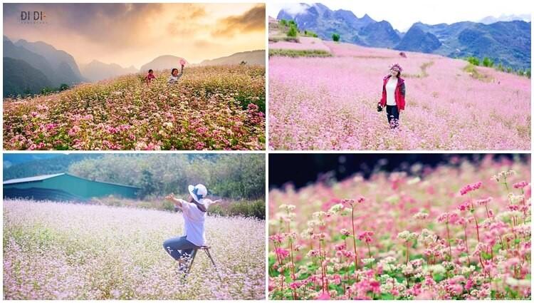 Lên Hà Giang mà xem Mùa hoa Tam Giác Mạch tháng 10 này đặc sắc đến nhường nào???