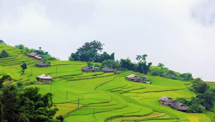 Du lịch Hà Giang, qua đèo vượt dốc đến Bản Phùng ngắm lúa thu
