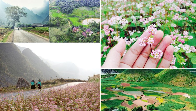 Lên kế hoạch rủ nhau du lịch Hà Giang tham gia lễ hội hoa tam giác mạch 2017