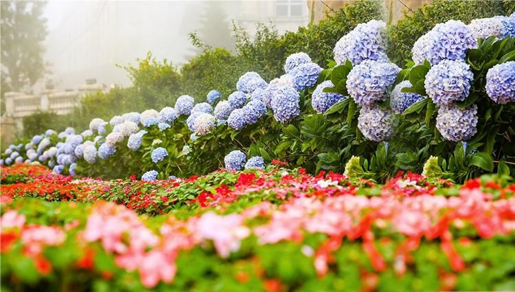 Rừng hoa thơ mộng trên đỉnh Bà Nà
