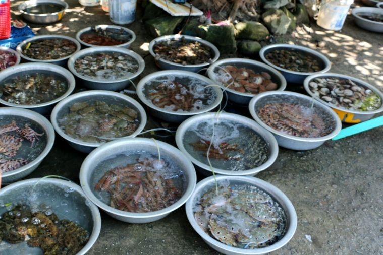 Tour Cù Lao Chàm 1 ngày lặn bình dưỡng khí