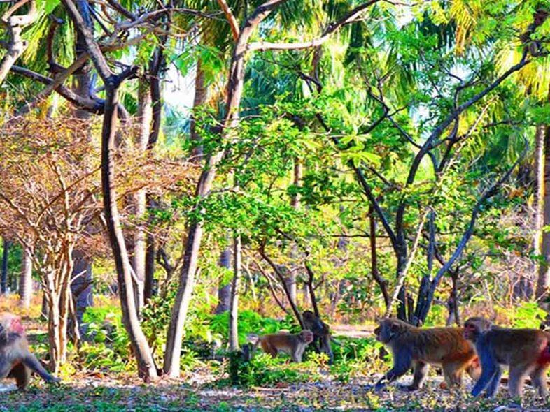 Tour Dốc Lêt - Đảo Khỉ Nha Trang 1 Ngày